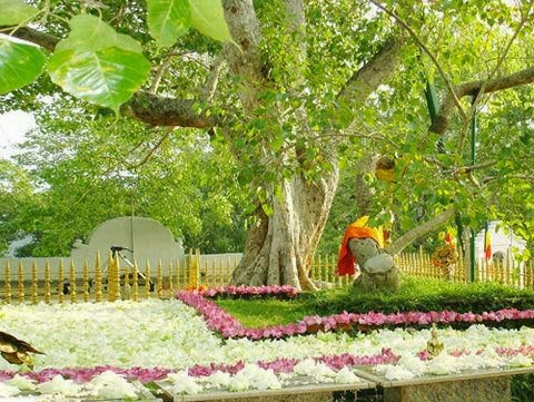 Sri Maha Bodiya