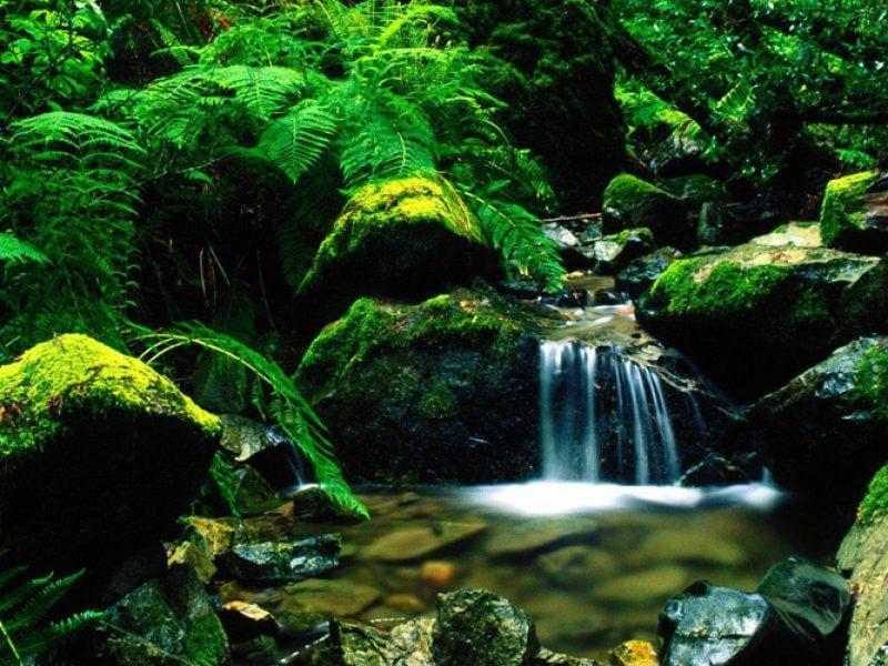 Galle - kanneliya rainforest