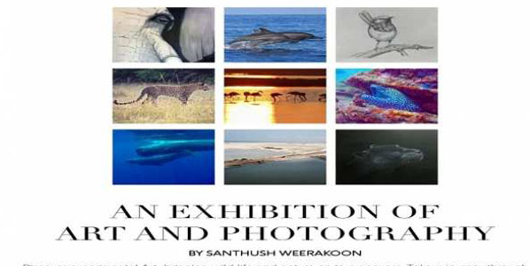 Exhibitions - Arts and Photography exhibition on Wildlife and Travel #Srilanka