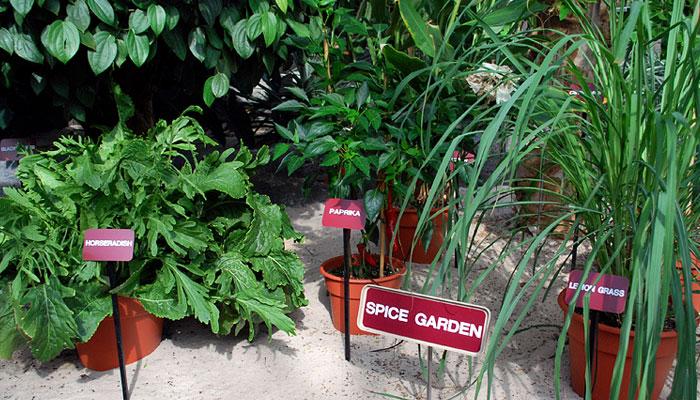 kandy - spice garden