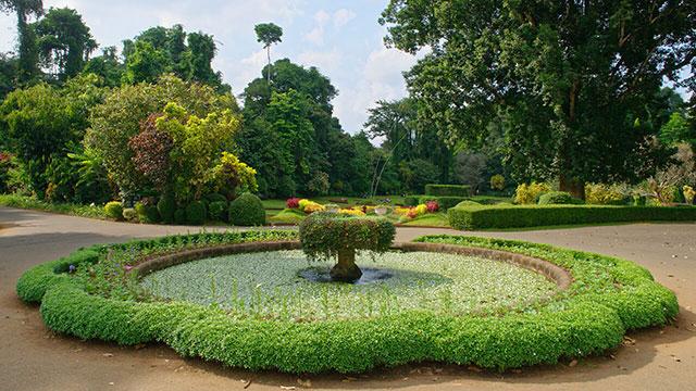kandy - peradeniya botanical garden
