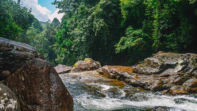 galle - kanneliya rain forest