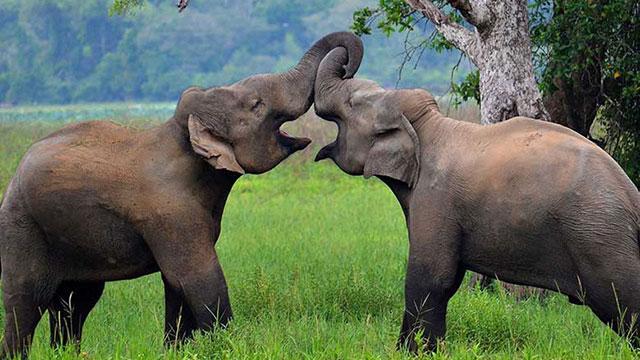 Polonnaruwa - Wasgamuwa National Park